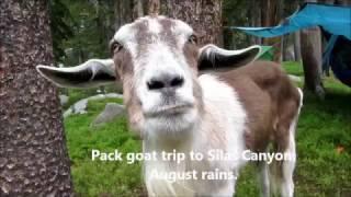 Toggles, Locks and Thunder:  Silas Canyon (Pack Goat 4)