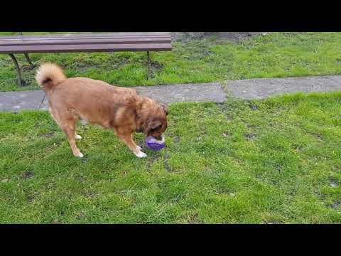 KONG Jumbler Ball - interaktywna zabawka dla psa