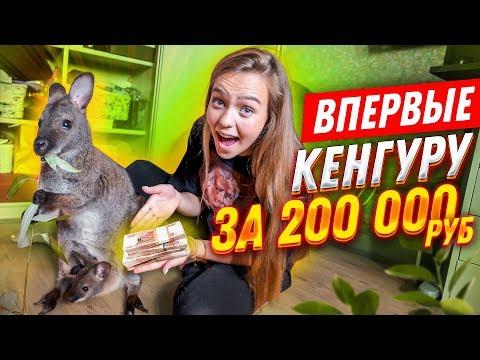 ВПЕРВЫЕ: КЕНГУРУ ЗА 200.000 рублей// 24 ЧАСА С НЕОБЫЧНЫМ ПИТОМЦЕМ