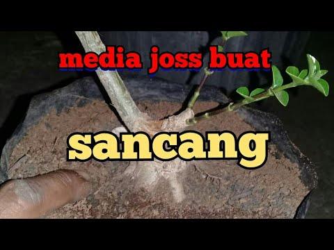 Media Jos Buat Sancang
