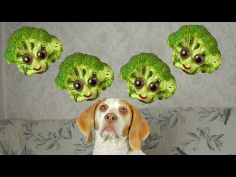 Dog vs. Broccoli: Cute Dog Maymo
