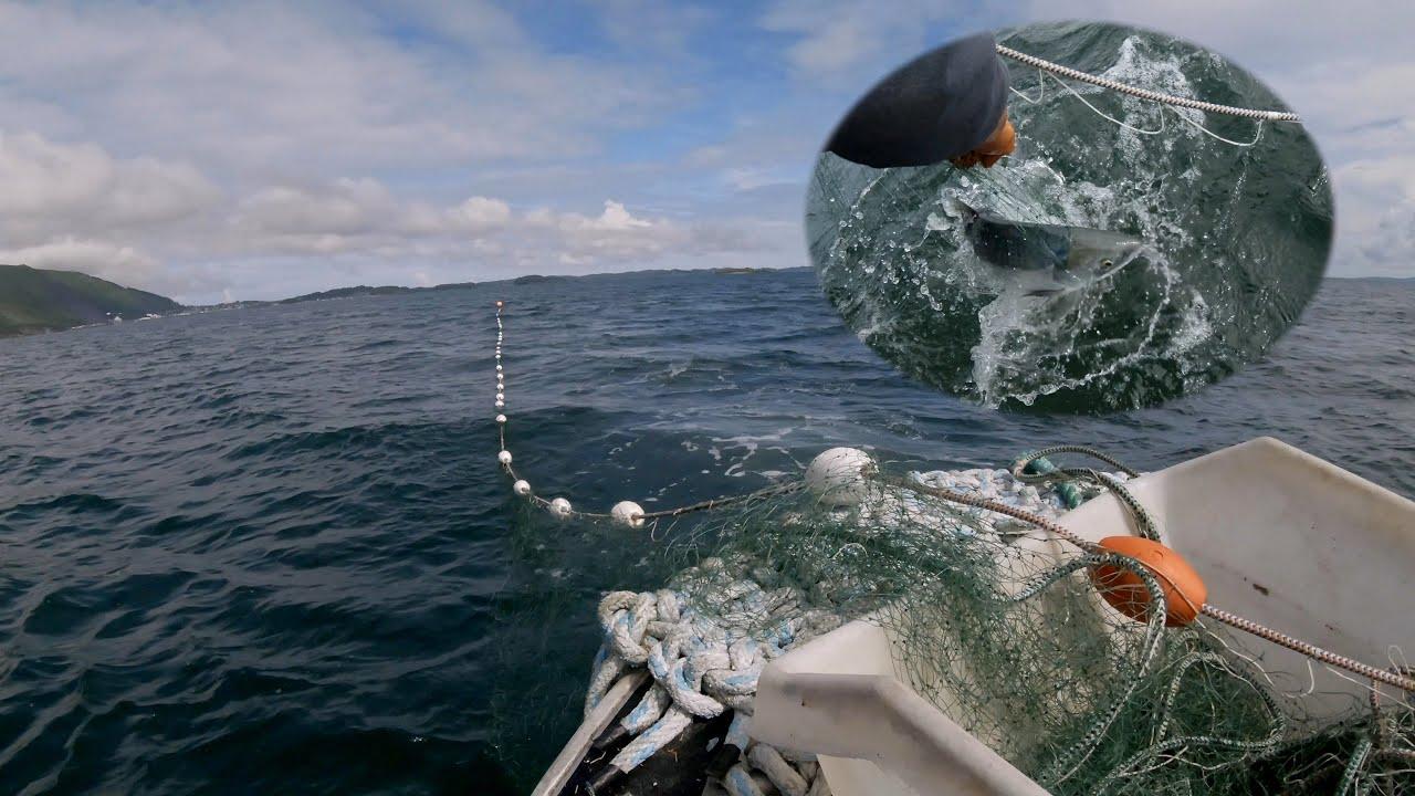 Salmon Gill Netting - Subsistence Fishing in Alaska