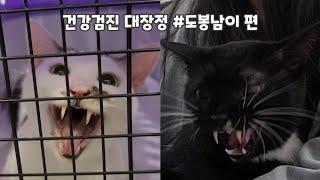22묘 다묘가정 건강검진 대장정 #도봉남이 편