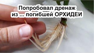 Дренаж из ОРХИДЕИ Фикус Эластика Укоренение Пересадка Уход за фикусом в домашних условиях
