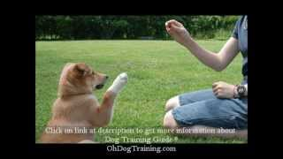 Trust And Confidence In Dog Obedience Training Class - Build Proper Obedience Within Your Dog