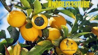 Botanica - Potatura del limone