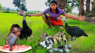 Beautiful girl meet monkey catch duck egg - Cooking egg duck eating delicious - Life Skills EP 21
