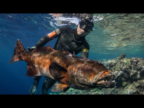 Shooting Coral Trout in Fiji