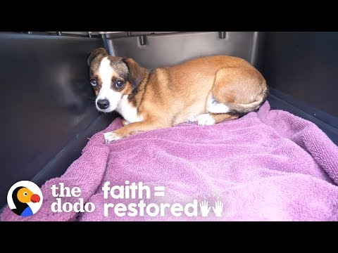 Dog Who Was Shaking For Months Finally Wags Her Tail | The Dodo Faith = Restored