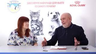 Хроническое заболевание почек у животных. Часть 1