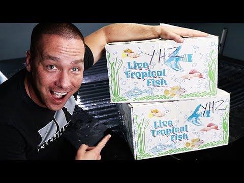 PREDATOR FISH REVEAL! | The King of DIY