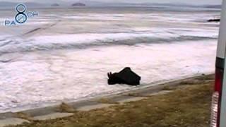 Потопельник в Среднеуральске