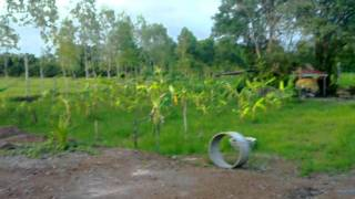 Holiday farm for Rent 250 Bhat per day sleeps 2 in a Thai House can sleep lots more in Tents
