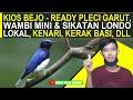 Update Stok Burung Dikios Bejo Ready Wambi Mini Dan Sikatan Londo Lokal Pleci Dakun Garut Dll  Mp3 - Mp4 Download