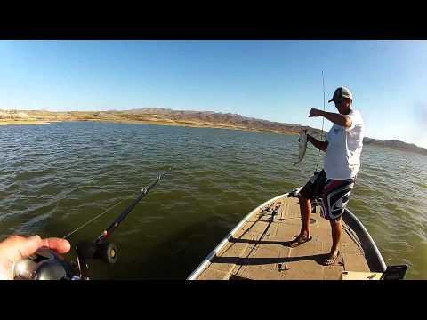 Smashin Bass at Alamo Lake