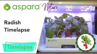 aspara™ nature radish timelapse