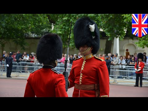 Queen's guard shoves annoying Chinese tourist out of the way - TomoNews Mp3