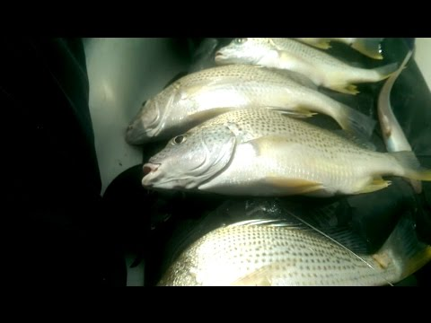(Vlog) Sunday Madness Ep05|white snapper fishing in Mombasa