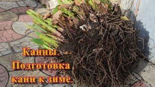 Канны.  Выкапываю клубни канн для сохранения в зимний период,(, 2016-11-08T11:35:10.000Z)