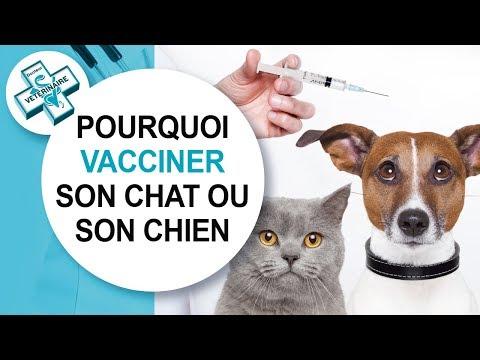 [Conseil Véto] La Vaccination • Vacciner Son Chat Ou Son Chien