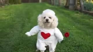 Собака в костюме джентэльмена 🐕🐕🐕💖