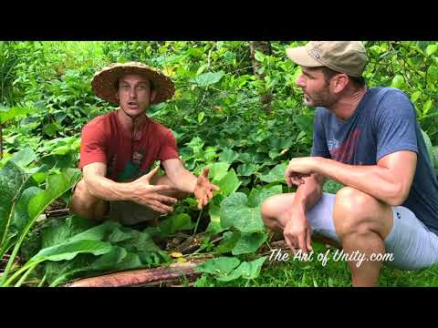 Agroforestry & Permaculture for Your Backyard from Kauai