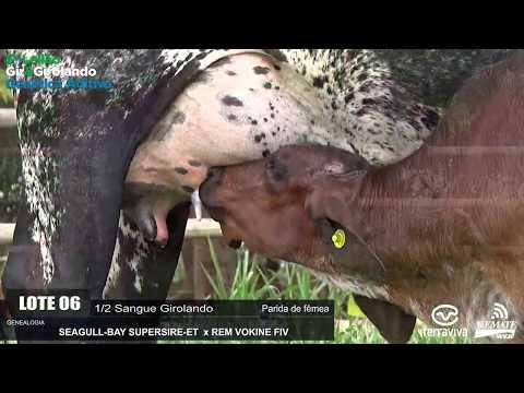 LOTE 06 - REM GAROUA - REM0328 - 0897-AU - 5º LEILÃO GIR E GIROLANDO GENÉTICA ADITIVA