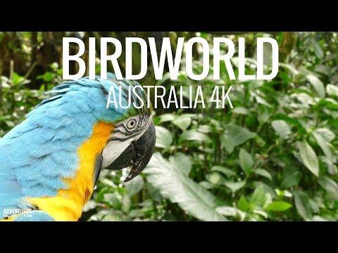 Birdworld Kuranda Bird Sanctuary in Australia 4K