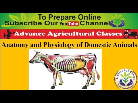 Anatomy And Physiology Of Domestic Animals Hindienglish