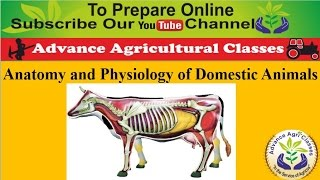 Anatomy and Physiology of Domestic Animals (Hindi/English) Agricultural Field Officer IBPS