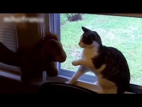 Funny Cats Scared Compilation - Scared Cats Videos