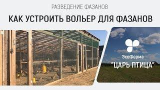 Разведение фазанов. Как устроить вольер для фазанов.