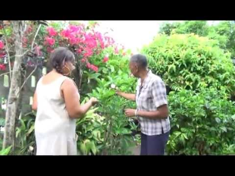Gardens of Antigua: Evelyn's Garden