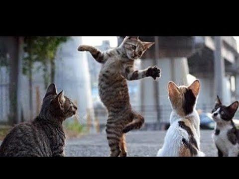 Top 7 dancing cats