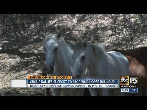 Group rallies to stop wild horse roundup