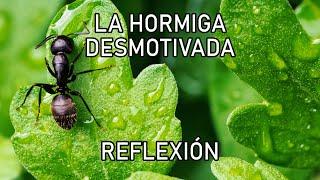 REFLEXION .- LA HORMIGA, Reflexiones diarias, Cortas, del Alma, Mejor Persona, Pensamiento Positivo