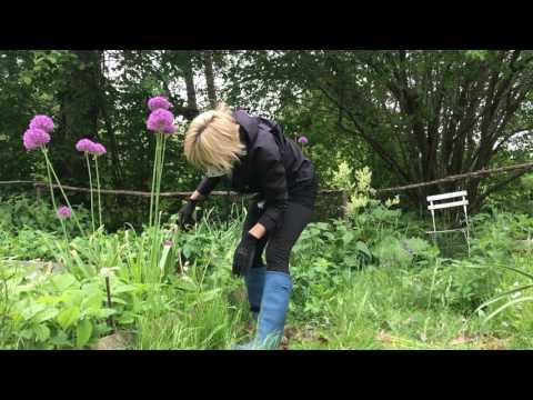 Yoga stretch for gardeners - så här stretchar du skönt efter trädgårdsgörat