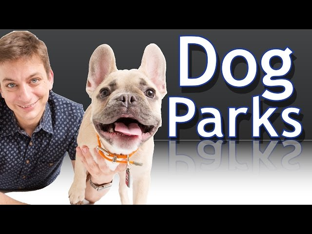 Are Dog Parks a Good Idea for your Dog?