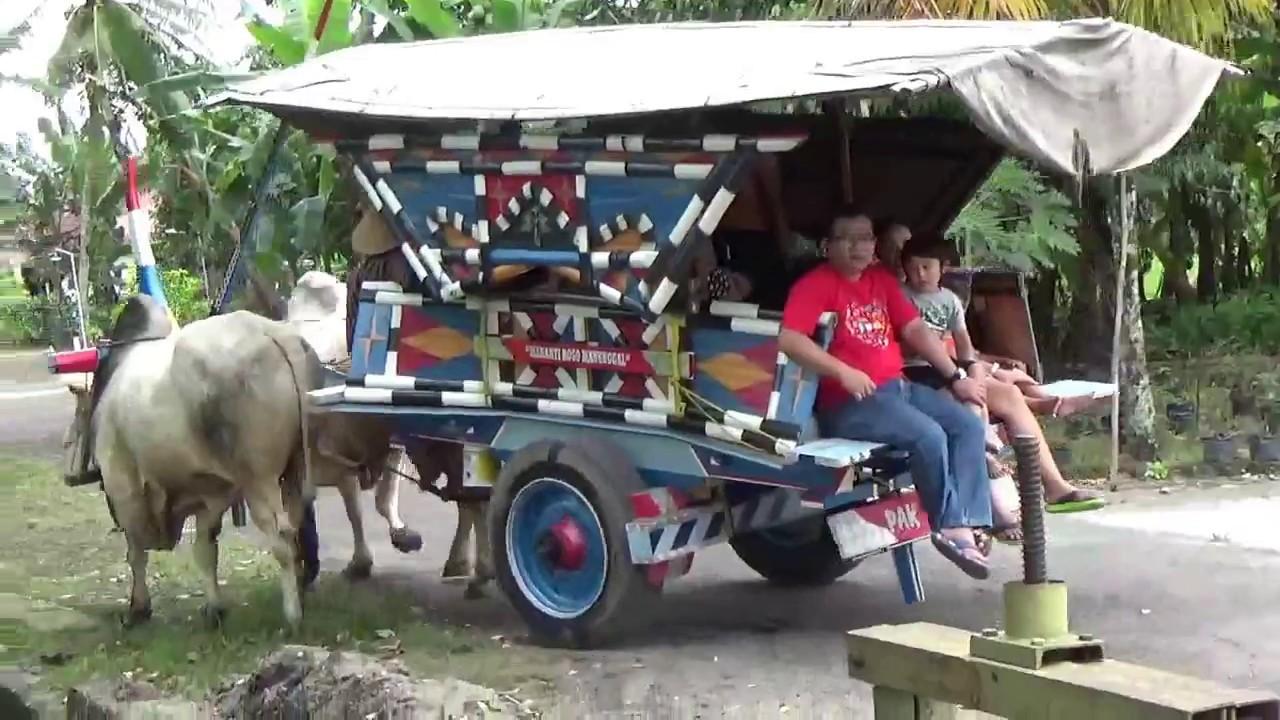 Kasih Makan Sapi Wisata Gerobak Sapi Yogyakarta Kompasangkar Kompasangkar Wedomartani