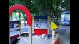 Собаки на детской площадке. Осторожно!