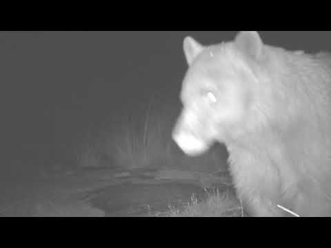Borderlands Critter Cams