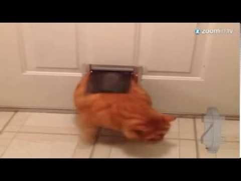 Understood chubby cat pet door can suggest
