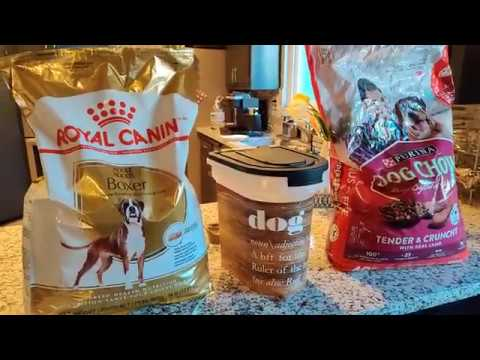 My Boxer Samson Switching To Royal Canin Breed Specific Dog Food