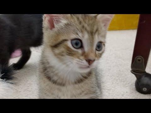 Kitten Close Up 2017-08-18