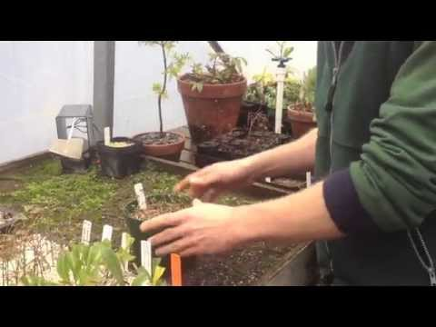 How to Take Cuttings for a Hedge