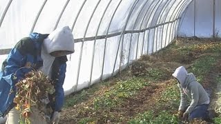 Making a difference: Baltimore urban farming continues through the winter