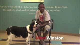 Winston, A 5-year-old English Springer Spaniel Available For Adoption