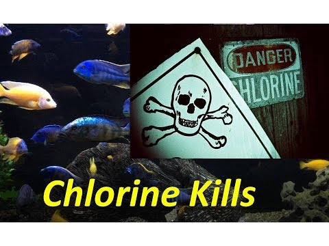 Chlorine, The Silent Killer Of Your Aquarium Fish