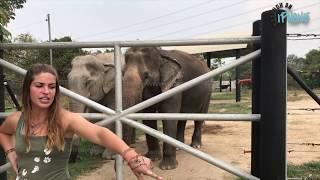 Wildlife Friends Foundation Thailand  Bathing the Elephants