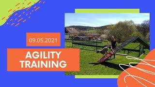 Agility training | lagotto romagnolo | 09.05.2021